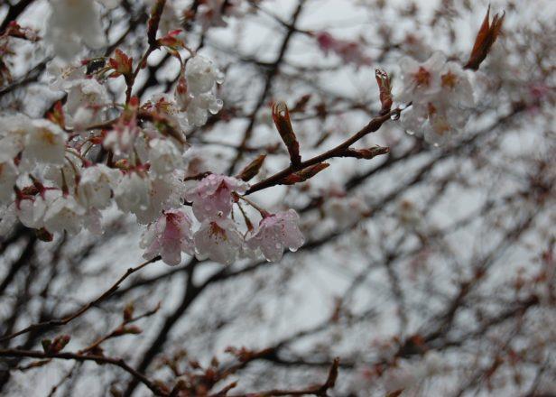 Seasonable Blend 春のブレンド